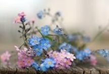 ~ forget me nots ~