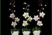 orchidee / cukrové kvety