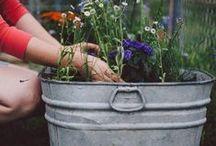 • GARTEN • / Inspirationen und Ideen zur Outdoorgestaltung sowie alles rund um den Garten <3
