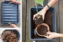 Kompost i byen / Marianne Marks »Kompost i byen« er en praktisk og enkel guide til, hvordan man kommer i gang med at kompostere – på altanen, i baggården eller i haven. Hæftet har simple trin for trin-guides til både køkken- og haveaffald, samt anvisninger på, hvordan kompost kan bruges optimalt i krukker og haver. Kompostering reducerer affaldsmængder, giver næringsstofferne tilbage til jorden og fjerner behovet for kunstgødning, så stop med at smide ud – begynd at kompostere!
