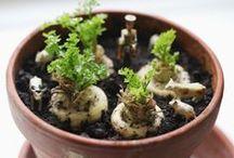 Spirebogen / Ulla Dietls »Spirebogen« får det til at gro! Kerner og sten fra hverdagens frugter og grøntsager kan spire og vokse til flotte, anderledes planter. Hæftet er fyldt med vejledninger og inspiration til at lave spirende, frodige og grønne vindueskarme. Nogle planter er til at nyde, andre er lige til at spise. Fra karse og kartofler, bomuld og banan til hasselnød og hvedespirer.