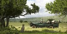 Africa / Are you looking for an special safari or holiday to Africa? With 40 years experience BMS-Travellers is known as the expert for private tailor-made travels to eastern and southern Africa. For a guided tour, self drive, fly in safari or special honeymoon to Africa BMS-Travellers is the right choice. Experience an unforgettable safari…