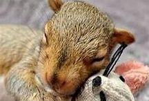 eekhoorns
