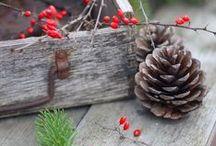 ~ pine cones ♥ ~