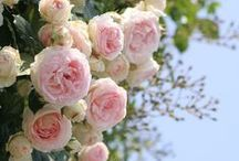 Floral Hues / by Kaylee Davis