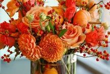 Orange Crush / Nothing makes a home stand out like warm lively pops of color.