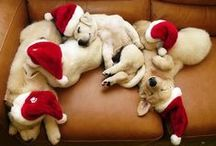 Holiday Puppies / Lovable puppies decked out for the season!