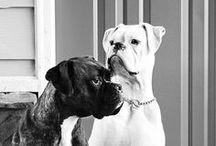 Boxers / Mijn liefde voor boxers