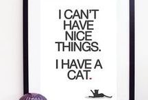 My alter ego... / Cats, cats and everything about cats!