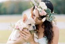 Puppy weddings / Because it wouldn't be the same without the help of your fur babies.