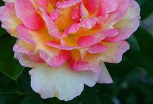 Flowers / by Doreen Ullom