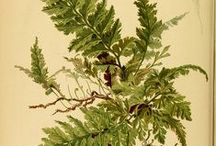 Botanic: Ferns, Moss & Ivy