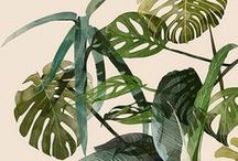Botanic: Plants