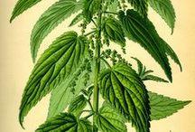 Botanic: Herbs