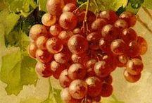Botanic: Grapes