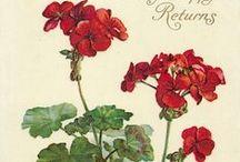 Botanic: Flowers