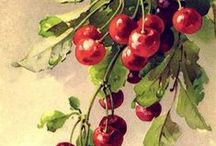 Botanic: Fruits