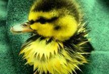 Linnut / Koko maailman linnut jotka Jumala on armossaan luonnut ihmisille iloksi. Sillä oletko huomannut että siellä missä on ihmisiä siellä tapaat myös lintuja olitpa sitten maalla tai kaupungissa.