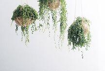 Plants / I'm obsessed.