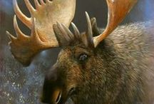 I love Mooses !!!!!! / My love for Moose  / by rosalie magistro