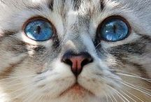 Cats / Cats, kittens and the feline world