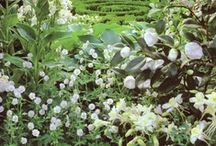 Gorgeous Gardens / Beautiful gardens to admire and inspire