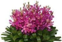 Corporate Flower Arrangements / Unique, floral designs for reception areas or offices.