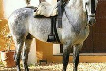 Horse Breeds / Different horse breeds