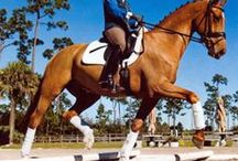 Healthy, Happy Horses / Horse tips: hoof care, training, diet, first aid...