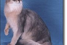 Feline / Kitties! Cat species, breeds, toys, anything for cats