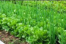 OGRODY, ogródki, warzywniki........