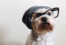 Pet Fabulous / We want one...no all of these! Pets with attitude.