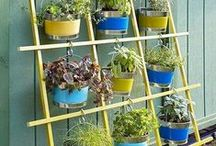 Gardeners' Corner / Feel like you don't have a green thumb? Well here we provide great tips and products to turn that attitude around and start planting that beautiful garden you have always dreamed about! / by VMInnovations