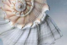 Seashell/Beach Love / My love and fascination of seashells.