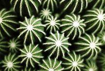 Cactus / Un peu de piquant
