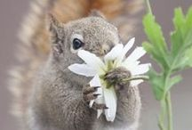 animal photography ◙ / by ˙·●๑♔eleni♔๑●·˙