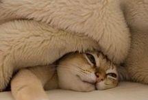 cats ≡^.^≡ meow / by ˙·●๑♔eleni♔๑●·˙