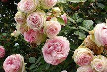 Flora y Fauna❤