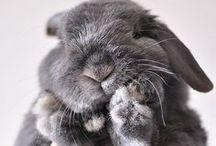 too cute! / Things that make you go Aaaah