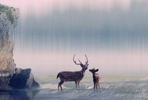 deers,swans and others...