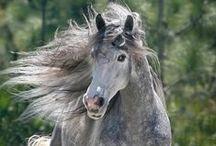 horses<3