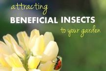 Garden Insects / Harmful and Beneficial Garden Insects