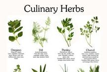 Herbs / All About Herbs