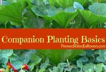Companion Planting / Beneficial Plant Combinations