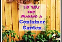 Container Gardens / All About Container Gardens