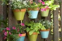 Container Gardening / Gardening with container plants and flowers, both ordinary and unusual and garden tips for growing them