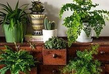 Living: Indoor garden / Working on ideas to create an indoor garden