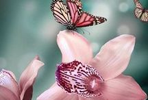 Butterfly / Butterfly are like small piece of heart...