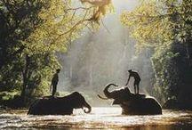Earthlings / Greetings, from beauty beings of earth.