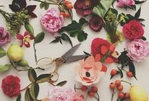 Blooms / by Kamaria Marden